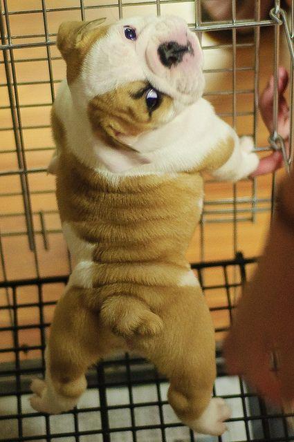 Cutest tush ever?
