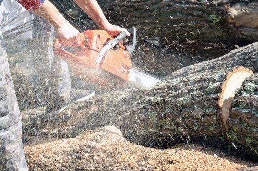Dead Trees, Sales Pipelines & Loss Aversion [Research] via @Jill Konrath