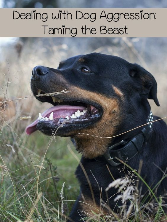 Dog aggression is nothing to take lightly. At the least, your dog will have to be observed for rabies, at worst dog aggression can lead to injury or death.