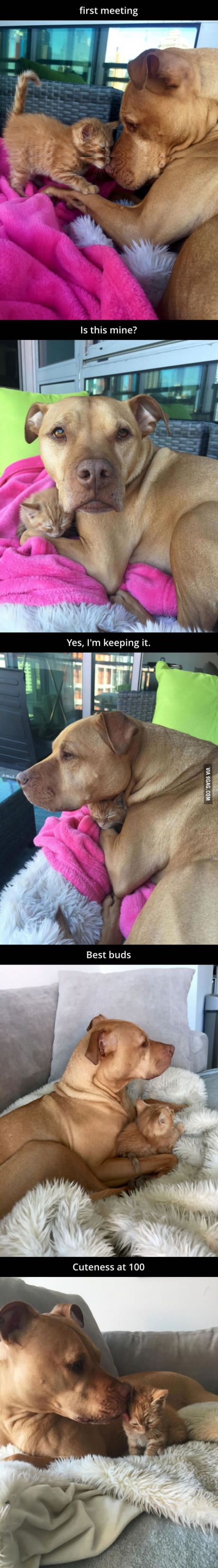 Dog gets its own kitten!