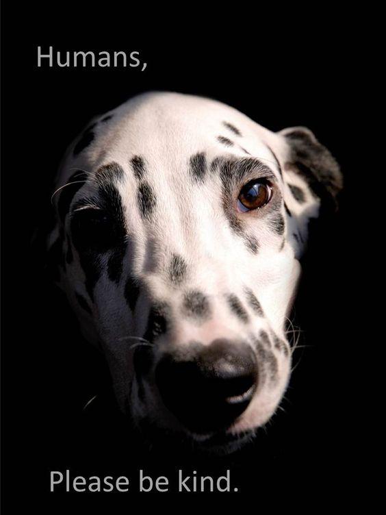 dog - humans, please be kind animals animal awareness