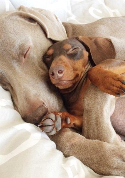 Dog love {harlowandsage}