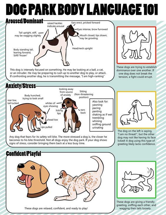 Dog Park Body Language 101