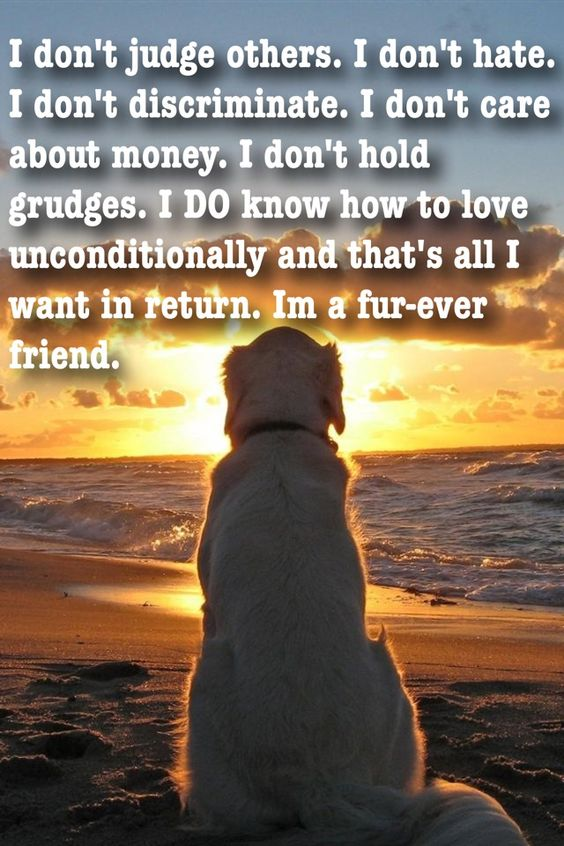 Dogs are just the best! Truly!