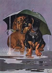 Don't like the rain! How true is