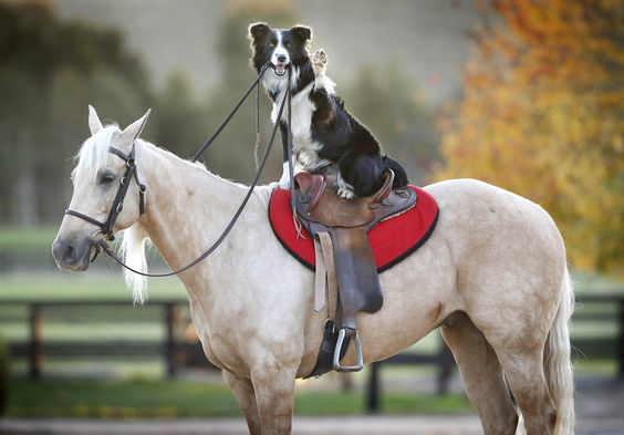 Hekan. | This Is A Dog That Rides Horses And It's Utterly Brilliant