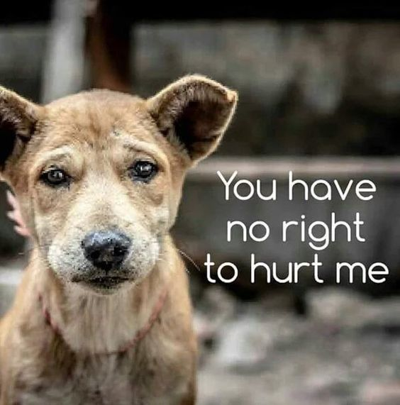 End Yulin dog meat festival- PLEASE!! Repin this!!