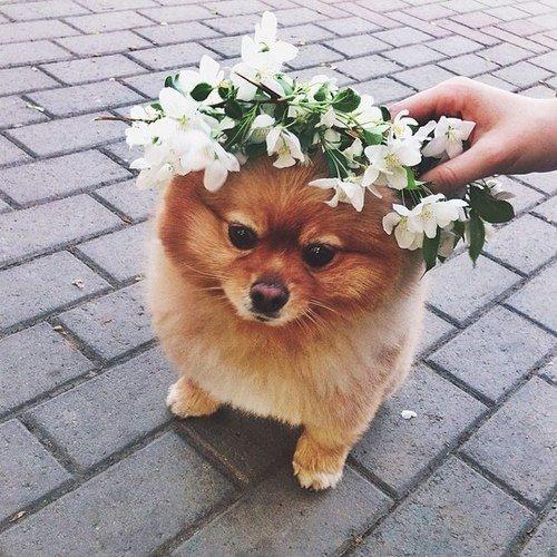 everyone needs a flower crown