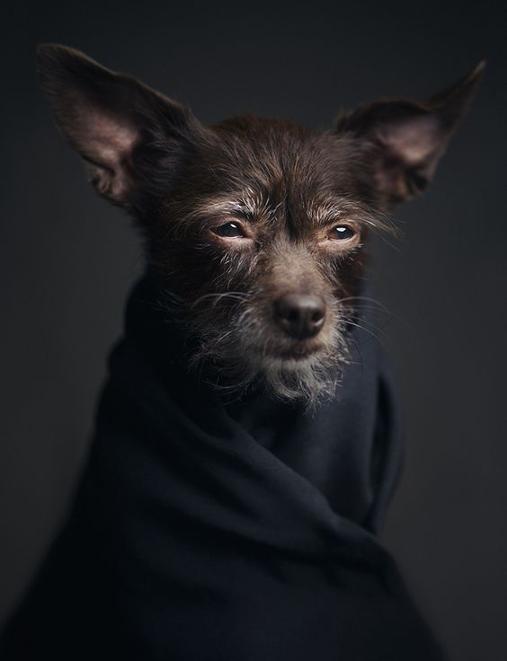 Expressive Portraits of Animals Reflect Powerful