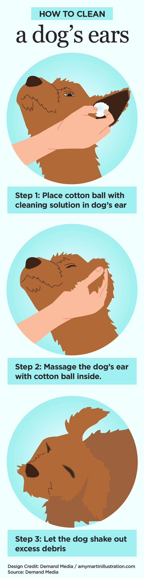 For the dog who hates having his/her ears cleaned: Easy steps to clean your dog's ears