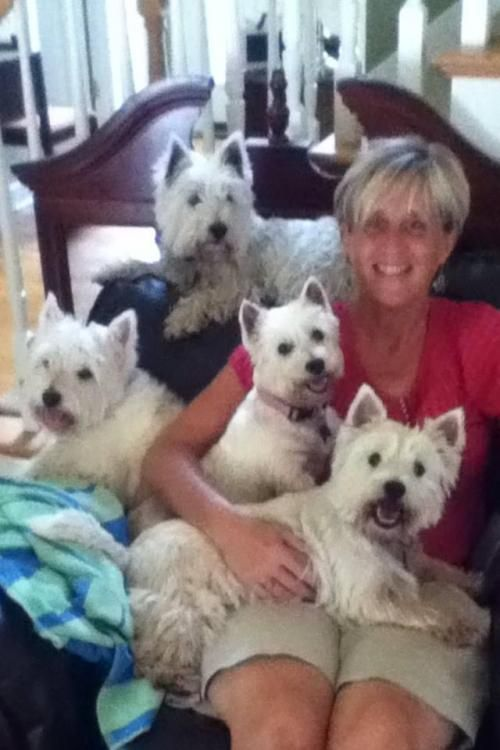 FOSTERS NEEDED is an adoptable West Highland White Terrier Westie Dog in Brentwood, TN WESTIE RESCUE SOUTHEAST is headquartered in Nashville, TN. We are open to foster applications ... ...Read more about me on @