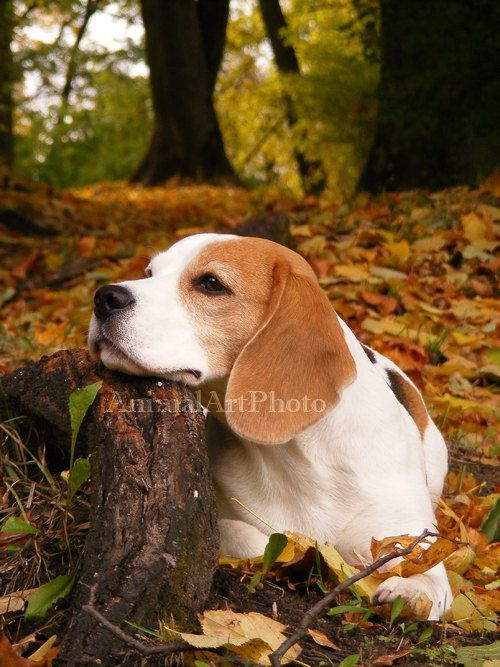 Фотки собак | 24 фотографии