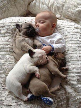 French Bulldog Baby Pile.