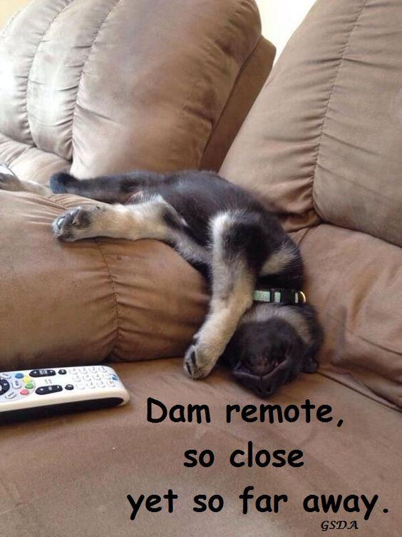 From my GSD FB Page German Shepherd Dogs Australia.