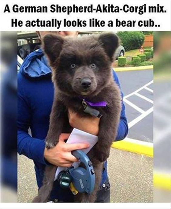 Funny Animal Pictures Of The Day – 16 Pics