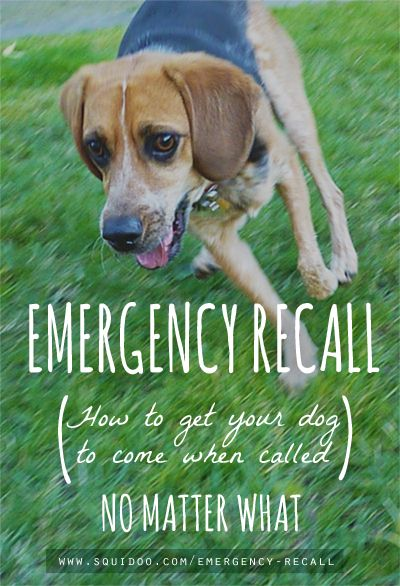 good advice on how to train your dog to come during emergency situations