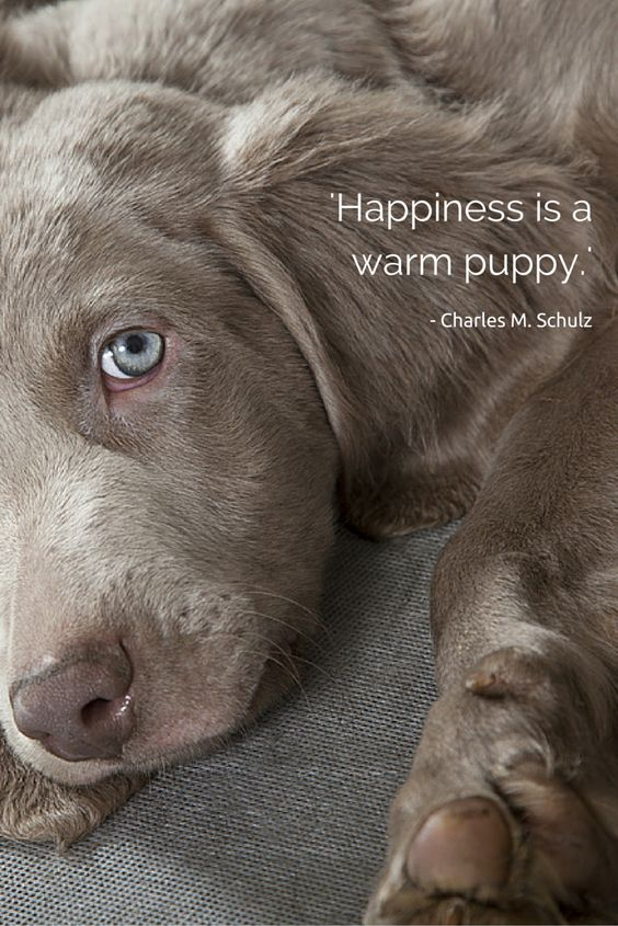 'Happiness is a warm puppy.'