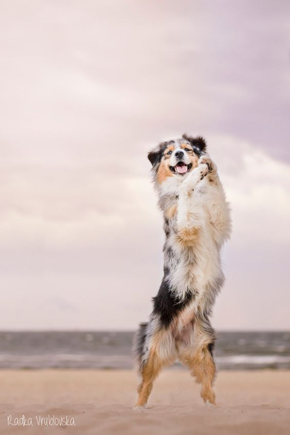 Happy aussie :) by aussiefoto on DeviantArt
