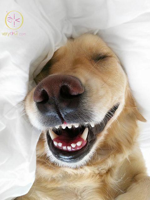 Happy Woofer