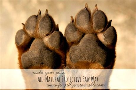 How to Make Your Own All-Natural Protective Paw Wax for Dogs & Cats | Herbs and Oils Hub