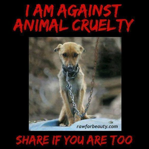 I am against animal cruelty pin it if you are too