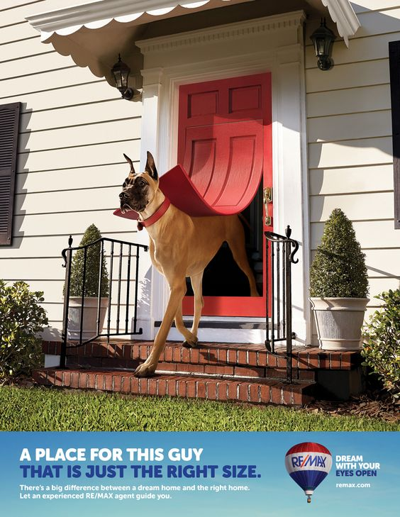 I love this picture! I need a doggie door like this. :)
