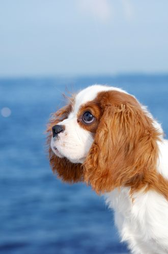 I love you, but I'm NOT going in the ocean!