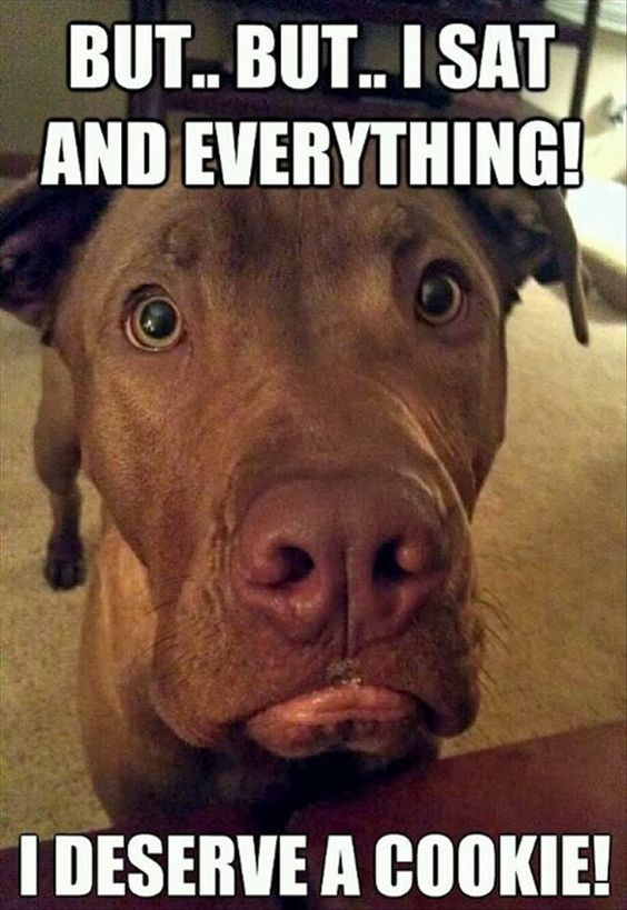 I swear this is what goes through my dog's head every time we won't give him people food. Lol