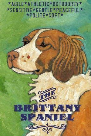 I think I'd like a Brittany Spaniel