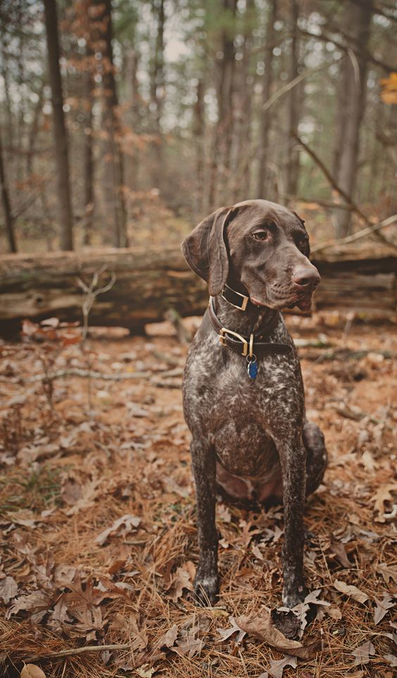 if i could go exploring with a bud like  Engaging Tails: Fynn | Daily Dog Tag