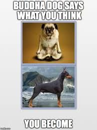 Image result for doberman memes