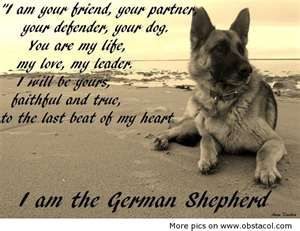 Image Search Results for funny german shepherd