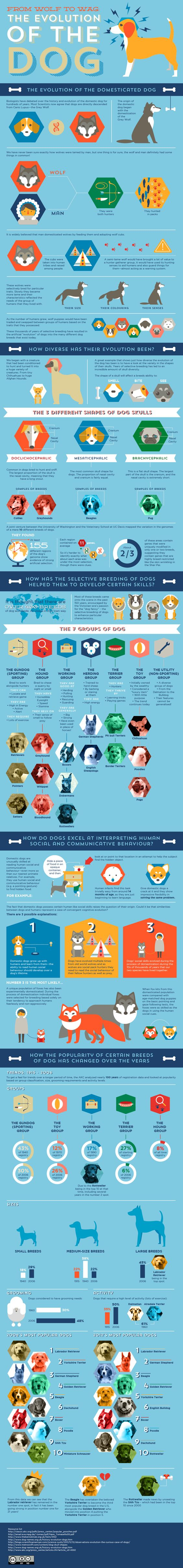 Infographic: Dog Evolution