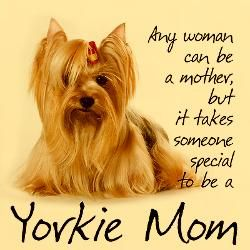It takes someone special to be a Yorkie Mom