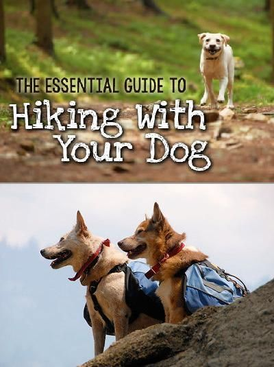 It's a beautiful day for an outdoor adventure - and what dog doesn't love an outdoor adventure? So, strap on your boots, pack up the pooch, and hit the hiking trails! But, before you head out into the wild, it's important to plan ahead, know your dog's limitations, and be prepared for whatever may cross your footpath. Read on as eBay shares the basics from planning to packing, to basic first aid, and trail etiquette to ensure that your day ends just as beautifully as it began!