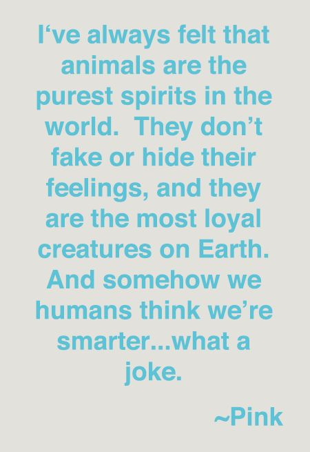 I've always felt that animals are the purest spirits in the world. They don't take or hide their feelings, and they are the most loyal creatures on earth. And somehow we humans think we're  a joke!