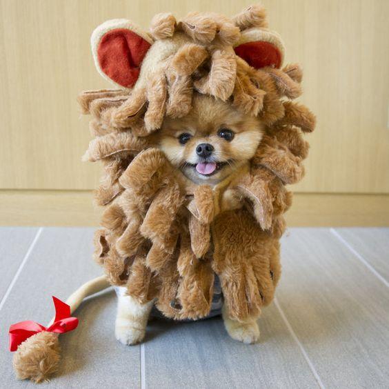 Jiff The Dog Just Won Halloween