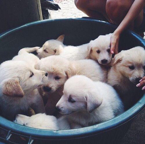 Картинка с тегом «dog, puppy, and cute»