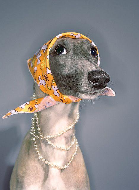 lady dog ♥