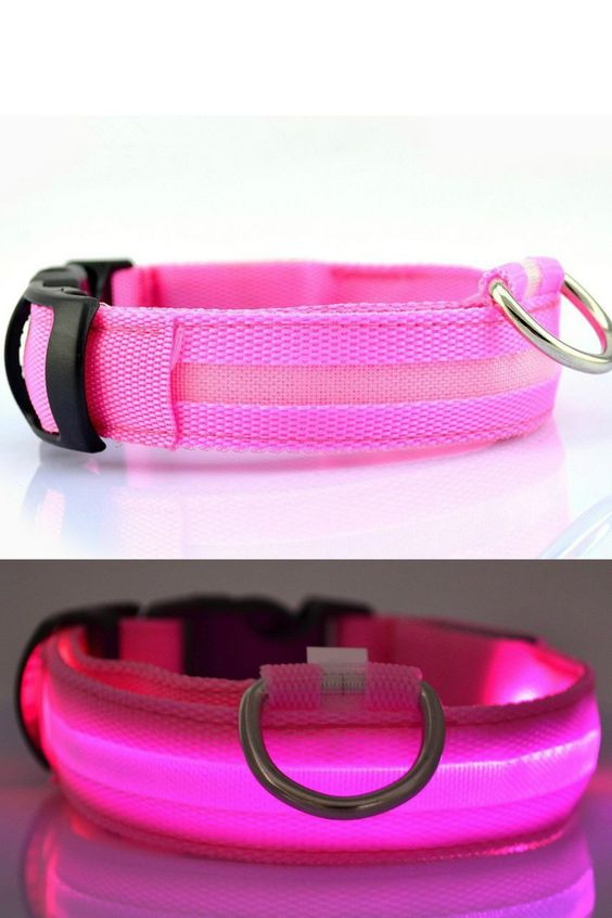 LED Pet Collars – One Of Kind Gifts