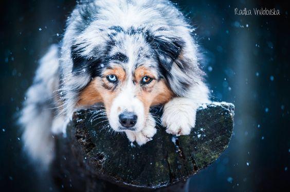 Let it snow by aussiefoto on DeviantArt