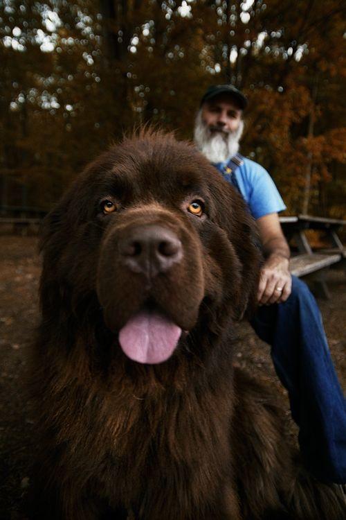 Lol sweetest dog ever! Newfoundland Dog