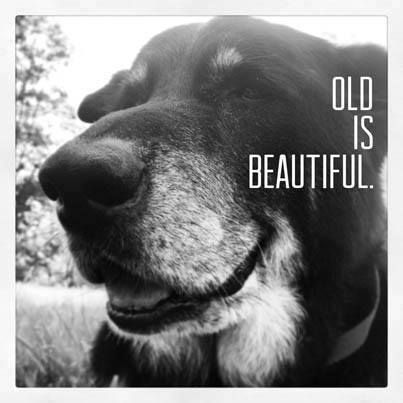 Looking to adopt a pet? Give an old dog a great life. You'll be thankful for it.