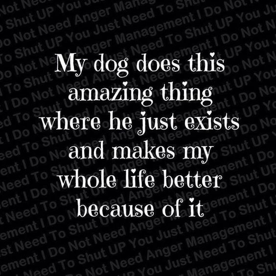 Love my dog! ♥ my other dog has the same effect on my life, SHE makes everything amazing.