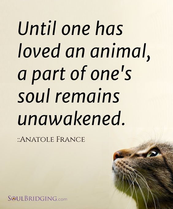 "Love of Animals  ""Until one has loved an animal, a part of one's soul remains unawakened."" - Anatole France #quotes #animal #love"