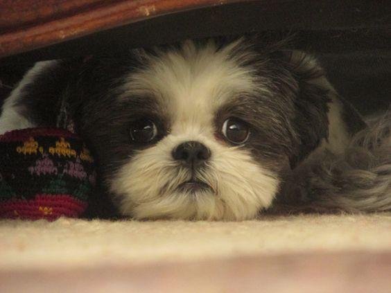 Love this puppy,