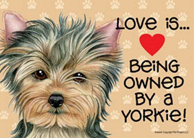 love yorkies | Details about Love is Being Owned by a Yorkie Puppy 7