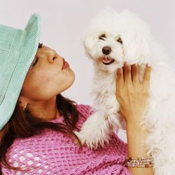 Maltese dogs are subject to tear staining.