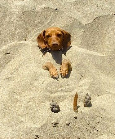 Man! This dog must love being on the beach!