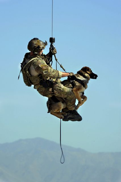 Military service dogs I know this doesn't fit firefighting but SAR dogs military dogs and all other working dogs are amazing! Gotta love our furry friends!